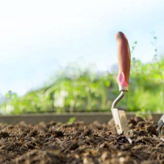 Trädgård & odling